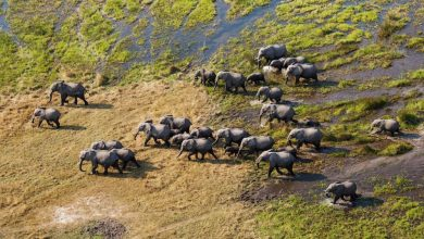 Photo of Elephants counted from space using satellites and AI | Livescience.com