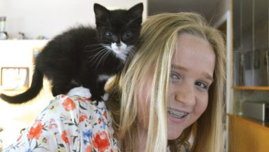 Photo of Working to help: Young entrepreneur raises more than $420 for rescue shelter